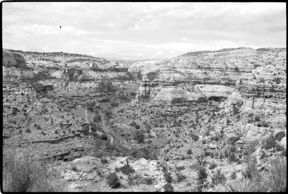 South of Boulder Mountain. View shot on Tri-X, Nikon Ftn camera, Nikor 35mm f/2 lens. 1000th sec F/11