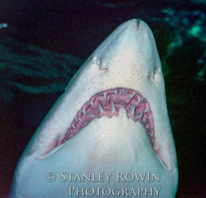 Underwater detail of shark