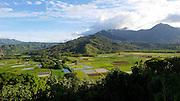 Taro Field, Hanalei Valley, lookout, Kauai, Hawaii