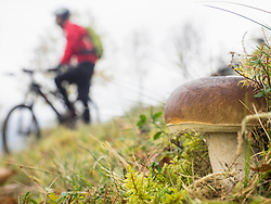 Close-up of mushroom with mountain biker in the background, Vosges, France