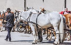 THEMENBILD - ein Fiaker mit weißem Pferdegespann (Schimmeln) in der Salzburger Altstadt wartet auf Fahrgäste, aufgenommen am 31. März 2019 in Salzburg, Oesterreich // a horse-drawn carriage with white horses (Schimmeln) in the old town of Salzburg is waiting for passengers, Austria on 2019/03/31. EXPA Pictures © 2019, PhotoCredit: EXPA/Stefanie Oberhauser