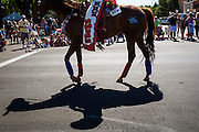 30 JUNE 2012 - PRESCOTT, AZ:   A woman on horseback rides in the Prescott Frontier Days Rodeo Parade. The parade is marking its 125th year. It is one of the largest 4th of July Parades in Arizona. Prescott, about 100 miles north of Phoenix, was the first territorial capital of Arizona.   PHOTO BY JACK KURTZ