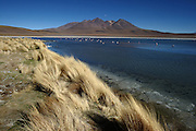 This is Lago Cañapa, one of many lakes found surrounded by desert and volcanoes in the Bolivian Altiplano