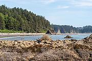 People enjoy Second Beach, Olympic National Park, Washington, USA.
