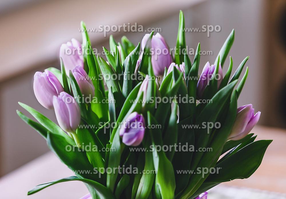 THEMENBILD - ein frischer Tulpenstrauss mit schönen, fliederfärbigen Blüten. Schnittblumen sind ein beliebtes Geschenk zum Valentinstags, aufgenommen am 08. Februar 2019 in Kaprun, Oesterreich // a fresh tulip bouquet with beautiful, lilac-coloured flowers. Cut flowers are a popular gift on Valentine's Day in Kaprun, Austria on 2019/02/08. EXPA Pictures © 2019, PhotoCredit: EXPA/Stefanie Oberhauser