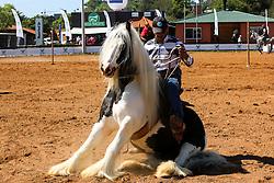 Gypsy Horse na 38ª Expointer, que ocorrerá entre 29 de agosto e 06 de setembro de 2015 no Parque de Exposições Assis Brasil, em Esteio. FOTO: André Feltes/ Agência Preview