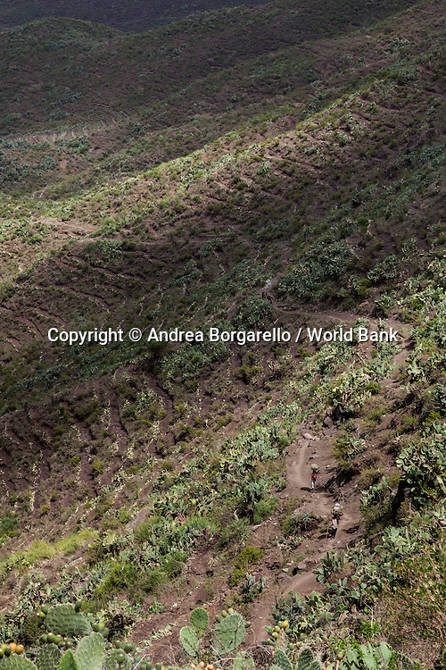 Ethiopia, Tigray region, Rayazebo District. Cactus fruits plantation recreated by the World Bank funded Sustainable Land Management Program to prevent land erosion.