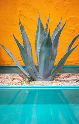 Agave americana planted by pool in front of an orange painted wall.<br /> Beneath a Mexican Sky Garden, RHS Chelsea Flower Show 2017