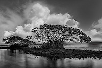 johnbob, johnbob carlos, everglades national park, big cypress, everglades, mangroves