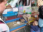 Frankrijk, Lille, 18-8-2013Lille ligt in een sterk de verarmde regio noordwest. Het is de hoofdstad van Frans Vlaanderen, van de regio Nord Pas de Calais en van het Noorder departement. Op de markt in Wazemmes. Een smeltkroes van culturen en bevolkingsgrtoepen, waarbij de noord afrikanen , moslims, de sterk vertegenwoordigd zijn. Dieren, huisdieren worden vanuit een busje verkocht. dierenleed,dierenhandel,huisdier, pups,pup,puppy,honden, cavias.Multiculti,multi,cultureel,moslim,islamieten,groente,fruit,Foto: Flip Franssen/Hollandse Hoogte