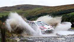 Toyota Gazoo Racing Ott Tanak on the Sweet Lamb stage during day three of the DayInsure Wales Rally GB.