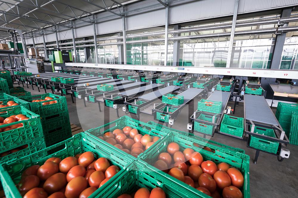 SCHWEIZ - NIEDERBIPP - Tomatensortieranlage bei Bösiger Gemüsenkulturen AG - 21. Juni 2019 © Raphael Hünerfauth - http://huenerfauth.ch
