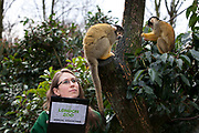 London, UK. Thursday 3rd January 2013. Zookeepers count every animal during ZSL London Zoo's annual stocktake. The compulsory count is required as part of ZSL London Zoo's zoo license, and all of the information is logged into the International Species Information System (ISIS), where it's used to manage the international breeding programmes for endangered animals. Zookeeper Kate Sanders counting Black-capped Bolivian Squirrel Monkeys.