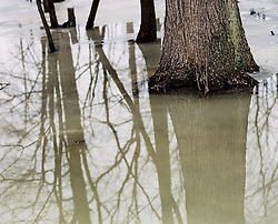 Tree trucks in water and reflections of branches