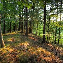 An oak and pine forest on an esker in Medfield, Massachusetts.