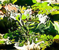 abstract green fluid shapes on dark green background with high contrasts, bright colors and green shades.