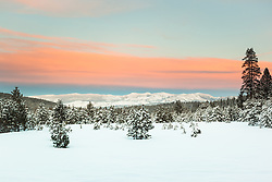 """""""Snowy Field at Sunset 1"""" - Photograph of a snow covered field and pine trees at sunset near Coldstream Pond in Truckee, California."""