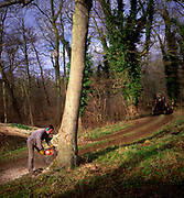 A01XD3 Sequence of nine Man cutting down an ash tree in English woodland