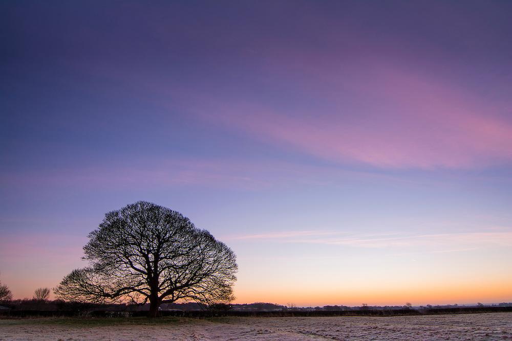 Peckleton Tree taken at sunrise.