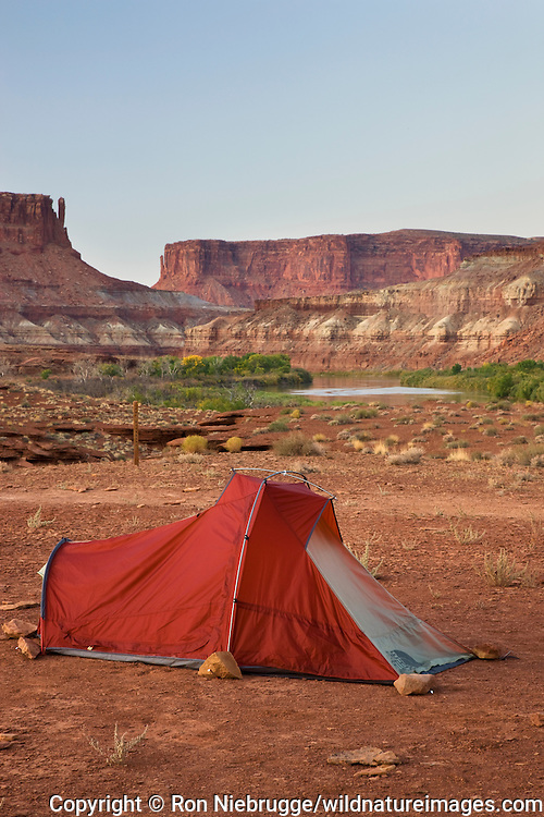The Green River and the Labyrinth Campground site A, along the White Rim Trail, Island in the Sky District, Canyonlands National Park, near Moab, Utah.