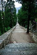 Cypress-lined stairway from Glavica Svetog Antuna (Hill of Saint Anthony). Korcula, island of Korcula, Croatia