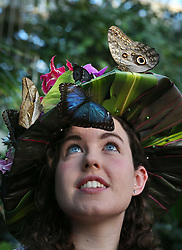 © Licensed to London News Pictures. 15/01/2016. Wisley, UK. Butterflies land on entomologist Anna Platoni as she wears a hat made from tropical flowers at the launch of 'Butterflies in the Glasshouse' at RHS Gardens Wisley. Hundreds of butterflies are released into the warm surroundings of glasshouse in this annual event. Forty different species will flit and feed among the tree ferns, palms, creepers and flowers from January 16 to March 6, 2016.    Photo credit: Peter Macdiarmid/LNP