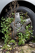Weeds grow up around the front wheel of an abandoned car in the borough of Lambeth, on 10th April 2018, in London, England.