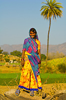 Women in colorful saris along the road from Ranakpur to Udaipur, Rajasthan, India