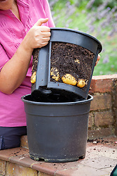 Device for growing potatoes in a pot