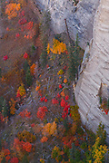 From the West Rim Trail, Zion National Park, Utah.