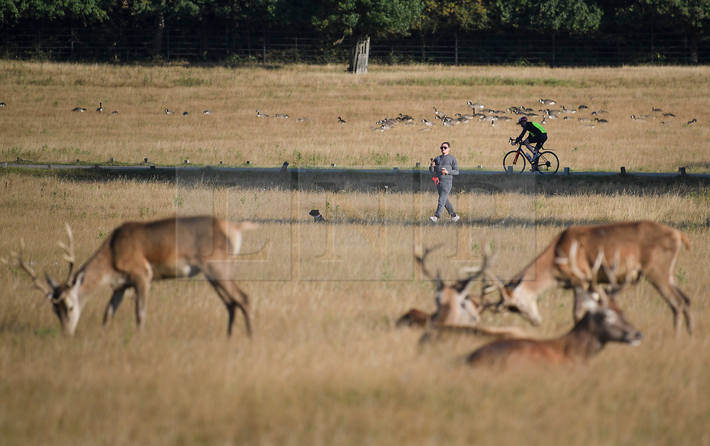 © Licensed to London News Pictures. 01/09/2019. London, UK. Members of the public enjoy the warm, bright morning on the first day of meteorological autumn in Richmond Park, west London. Photo credit: Ben Cawthra/LNP