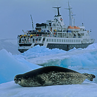 A crabeater seal (Lobodon carcinophagus) rests on an Antarctic ice floe while an tour expedition ship floats nearby.