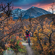 Sari Anderson rides through Gamble's Oak in Carbondale Colorado during peak autumn color.