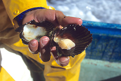 Showing Local Clams