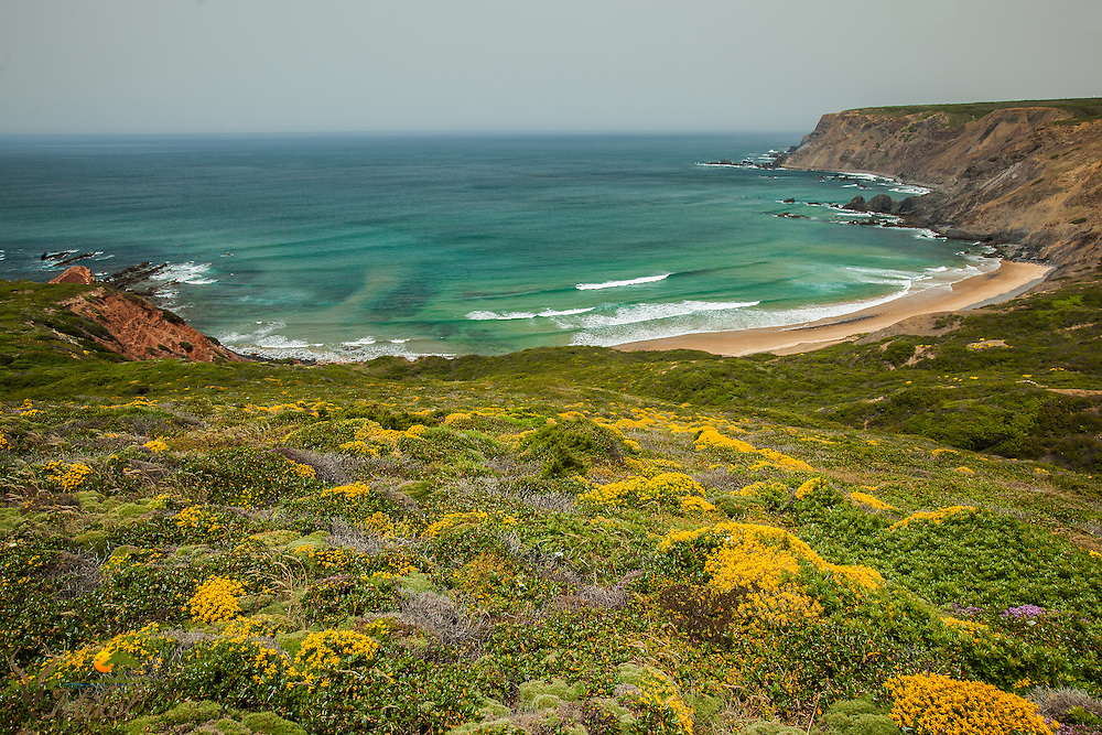 Beach and Surf with Wildflowers, Ponta Ruiva, Portugal