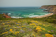 Beach and Surf with Wildflowers, Ponta Ruiva, Portugal