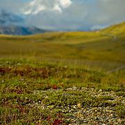 North America, United States, US, Northwest, Pacific Northwest, West, Alaska, Denali National Park, Denali NP, National Park, NP,Tour buses bring visitors to see Mt. McKinley (Denali), highest mountain in North America, Denali National Park, Alaska.