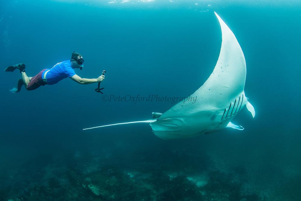 Giant Manta Ray (Manta birostris)<br /> Lesser Sunda Islands<br /> Indonesia<br /> Kip Evans