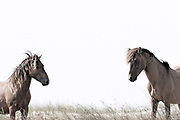 """""""Free will, though it makes evil possible, is also the only thing that makes possibly any love or goodness or joy worth having"""" ~ C.S. Lewis<br /> <br /> Tracie Spence's fine art photography series of The Spanish Wild Mustangs."""