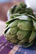 Fresh raw Artichoke, Cynara cardunculus