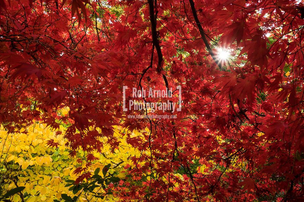 Vibrant autumn displays of colour at Winkworth Arboretum in Surrey