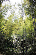 """Shunan Bamboo Sea (Chinese: 蜀南竹海;pinyin: shǔnánzhúhǎi) covers an area of over 120 kilometers in Sichuan Province.<br /> This forest has won its fame for its unique green and graceful trees: bamboos are here, there and everywhere.<br /> It is one of the shooting places of the Oscar award- winning movie """"Crouching Tiger, Hidden Dragon"""" directed by Ang Lee.<br /> <br /> © Giorgio Perottino"""