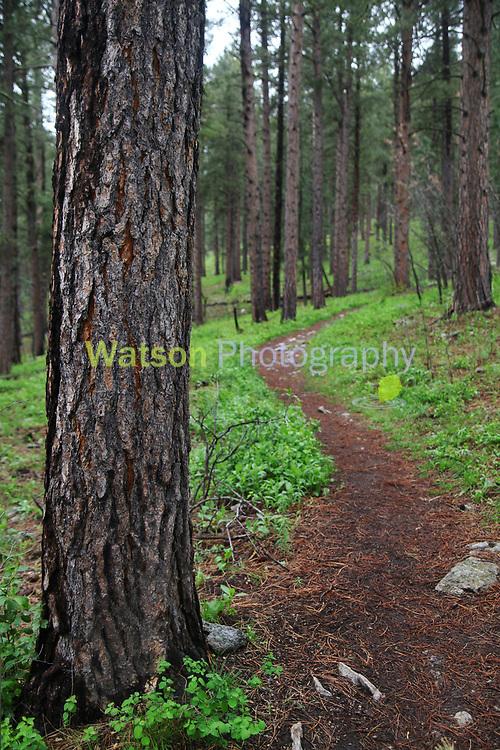 Spring Woodland Trails