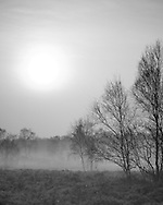 The sun rises through a thin layer of mist on a cool spring morning at Whitmoor Common near Guildford, UK. Picture by Andrew Tobin/Tobinators Ltd