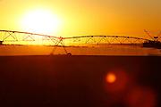 Sao Gotardo_MG, 25 de maio de 2015<br /> <br /> Fotos dos produtores de alho na regiao de sao gotardo.<br /> <br /> Foto: MARCUS DESIMONI / NITRO