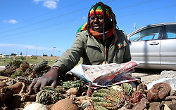 South Africa - Cape Town - 27 August 2020 - Roots, plants and different herbs all for different medicinal uses. John Olong a local rasta a traditional healer sells different traditional medicens from his stand in Blue Downs. on the 31st of August is African Traditional Medicine Day, Traditional African medicine is a holistic discipline involving the use of indigenous herbalism combined with aspects of African spirituality. About 80% of Africa's population relies on traditional medicine for their basic health needs. In some cases traditional medicine is the only healthcare service available, accessible and affordable to many people on the continent. In this case the significant contribution of traditional medicine as a major provider of healthcare services in Africa cannot be underestimated. Picture: Brendan Magaar/African News Agency(ANA) (ANATOPIX)