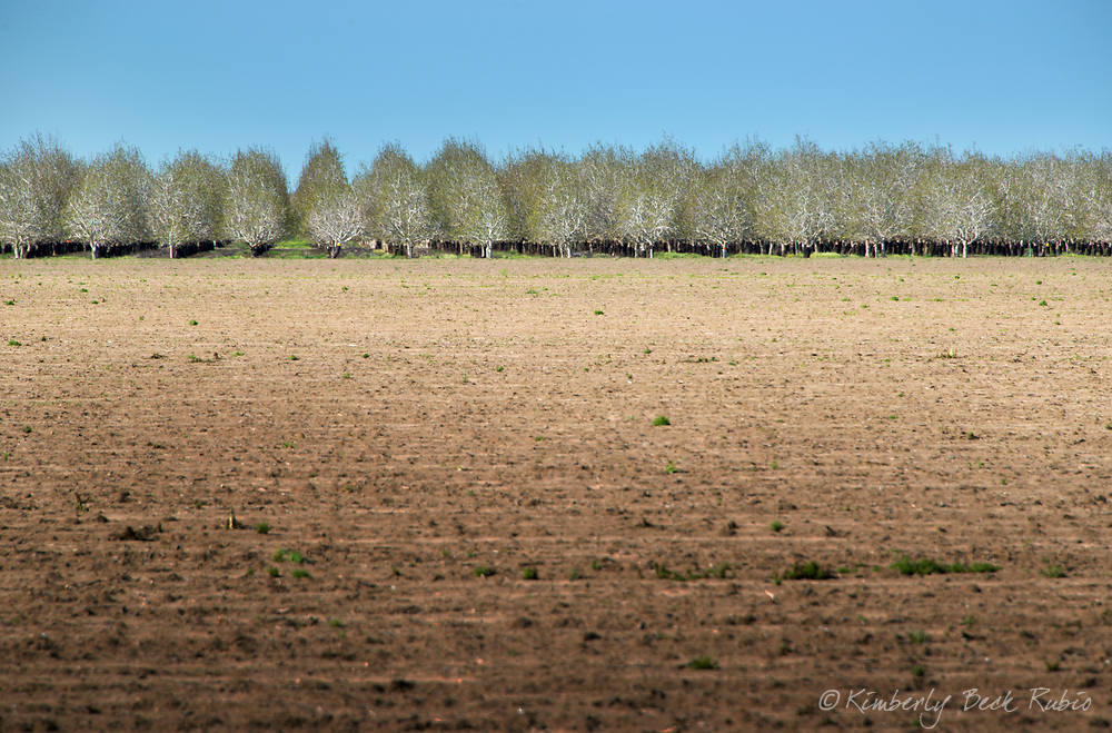 Tilled field in front of an orchard in Dixon, Northern California.