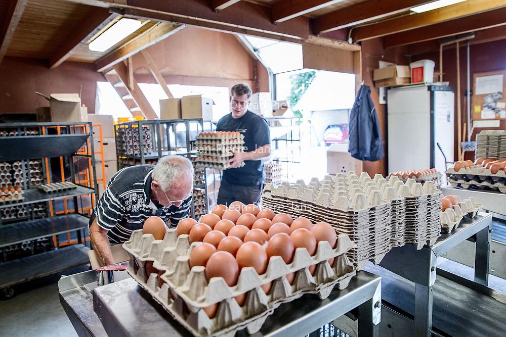 Nederland, Vinkeveen, 4 augustus 2017.<br />Jan Senten van Pluimveebedrijf de toekomst sorteert kistjes met eieren in diverse formaten<br />Het bedrijf is een begrip in Vinkeveen en omgeving en levert scharreleieren en leghennen in diverse formaten aan horecagelegenheden en winkelbedrijven in Amsterdam en omgeving Utrecht<br /><br /><br />Foto: Jean-Pierre Jans