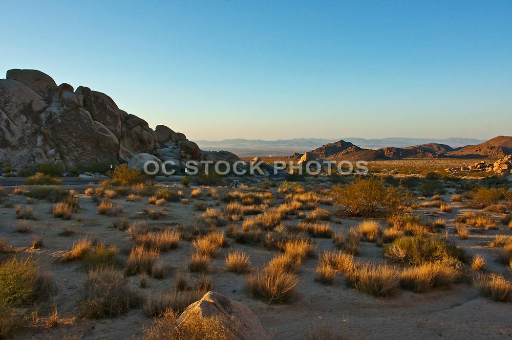 Joshua Tree National Park at Sunrise