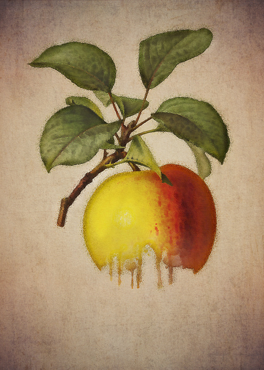 There are so many fascinating thoughts one can have, when looking closely at this wonderful fine art piece by Jan Keteleer. One of the first things you may think about are orchards. You can imagine trees filled with delicious apples of all shapes, sizes, and varieties. There is something compelling about this image.<br /> -<br /> BUY THIS PRINT AT<br /> <br /> FINE ART AMERICA<br /> ENGLISH<br /> https://janke.pixels.com/featured/apple-jan-keteleer.html<br /> <br /> <br /> WADM / OH MY PRINTS<br /> DUTCH / FRENCH / GERMAN<br /> https://www.werkaandemuur.nl/nl/shopwerk/Appel---Antieke-tekening-van-een-appel/478773/134